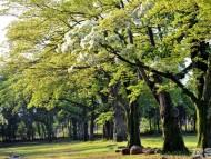 4.광양시, 꽃 지도 들고 떠나는 광양여행(유당공원 이팝나무)-관광과.jpg