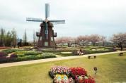 네덜란드 수교 60주년 기념 유기농 튤립, 순천만국가정원에서 활짝